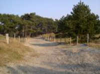 Norderney Wald